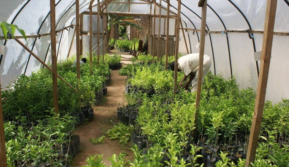 Greenhouse duties