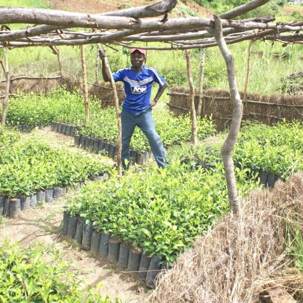 Doroba Farm