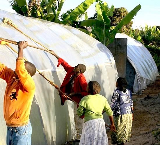 Washing Greenhouses