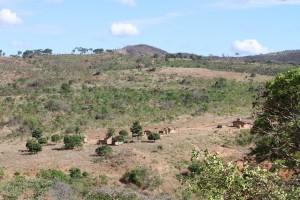 barren landscape