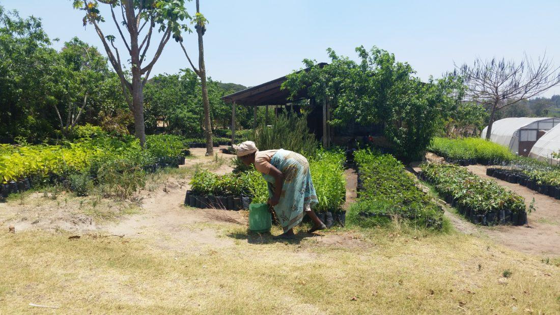 Lusangazi farm