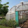Greenhouse Lusangazi