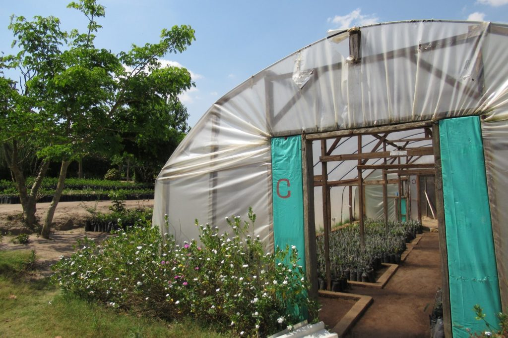 Greenhouse Lusangazi