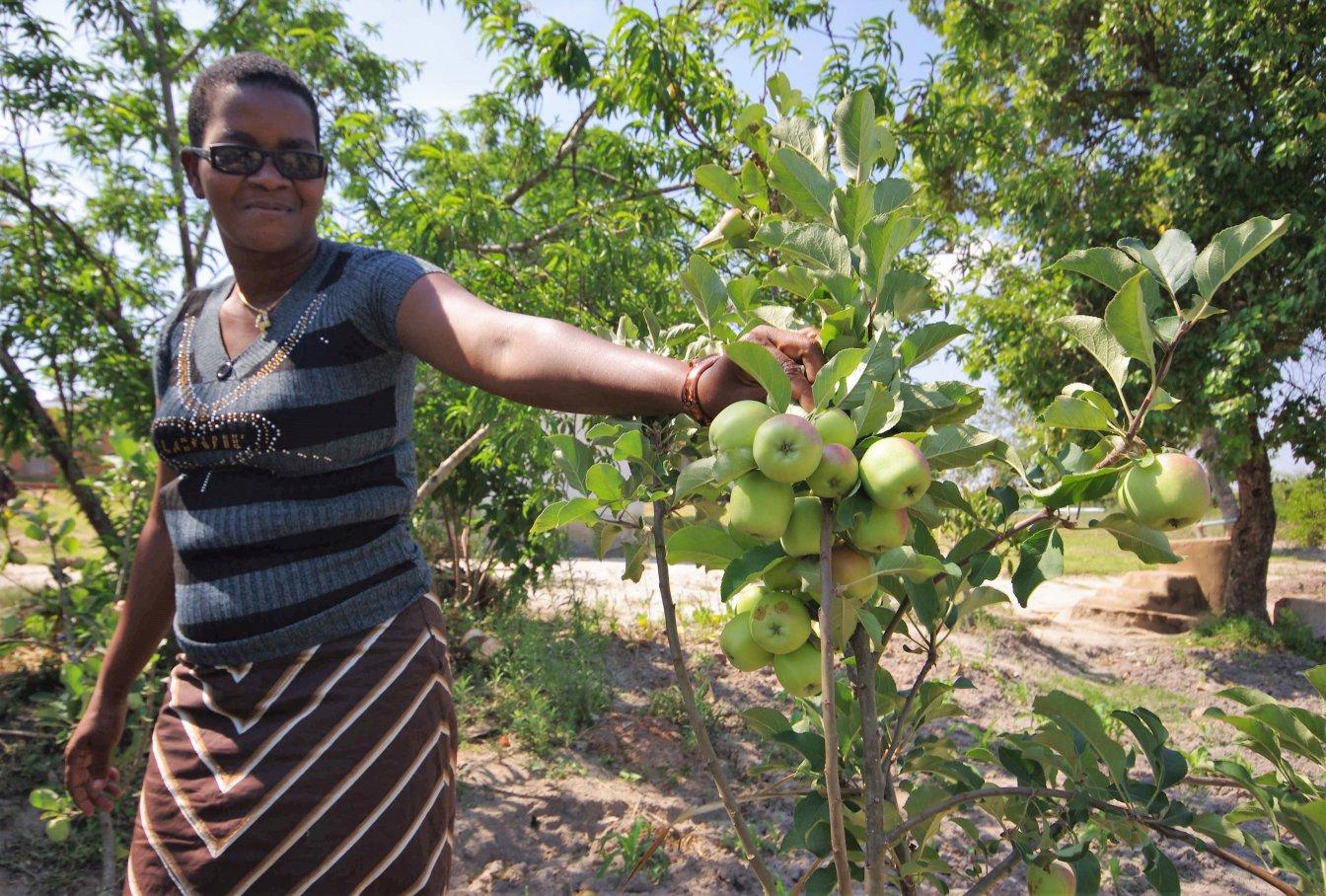 Rose apple Lusangazi