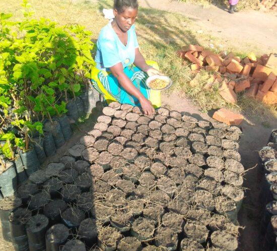 Margret Mwanza Sowing indigenous seeds at WfZ Lusangazi farm