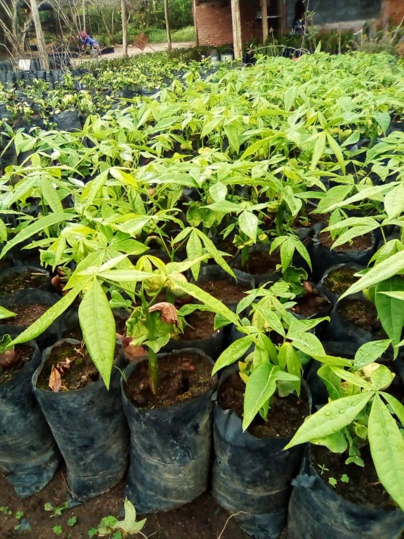 seedlings at WfZ Lusangazi farm