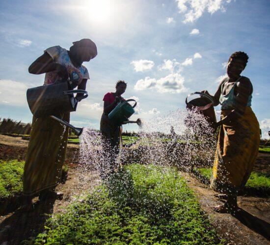 Enyezini watering