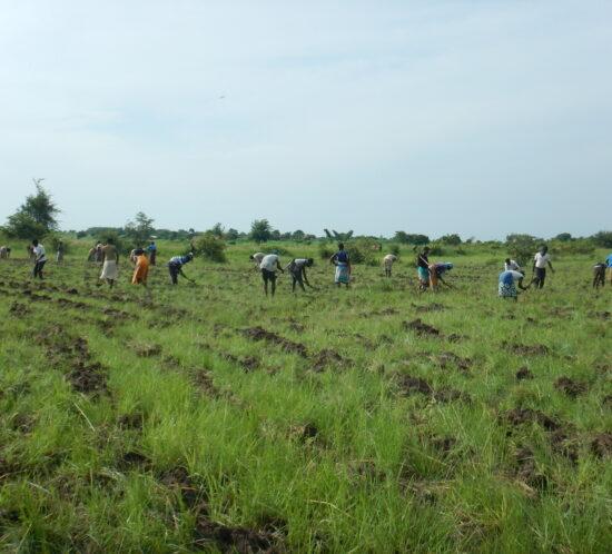 Kasera planters digging holes