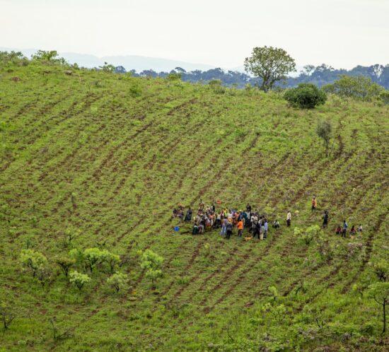 Misuku planters on hill