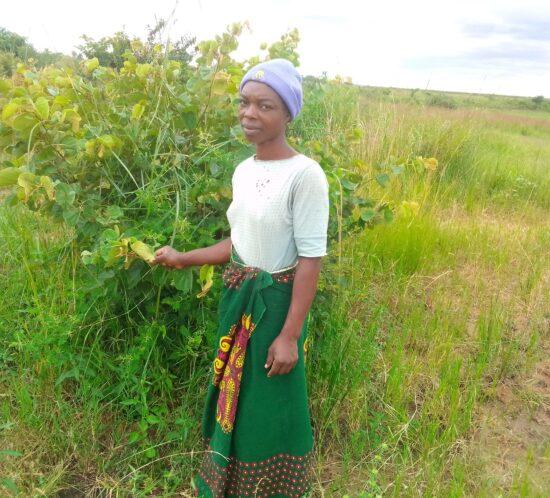 Chifundo Chikha Kasera planter