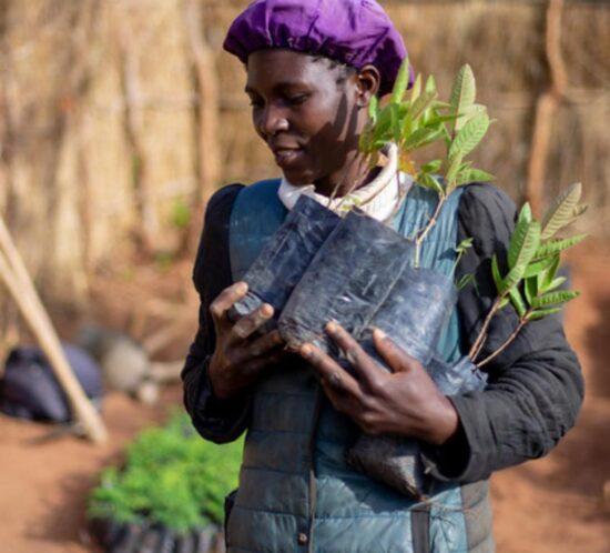 Elizabeth Mwale Enyezini planter