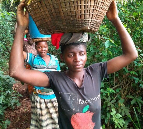 basket of Mkunkhu seedlings in Misuku